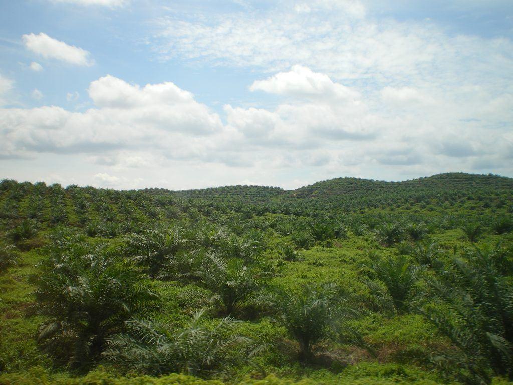 Palmölplantage in Malaysia