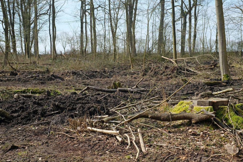 Aufforstung Baumspende Baden-Württemberg