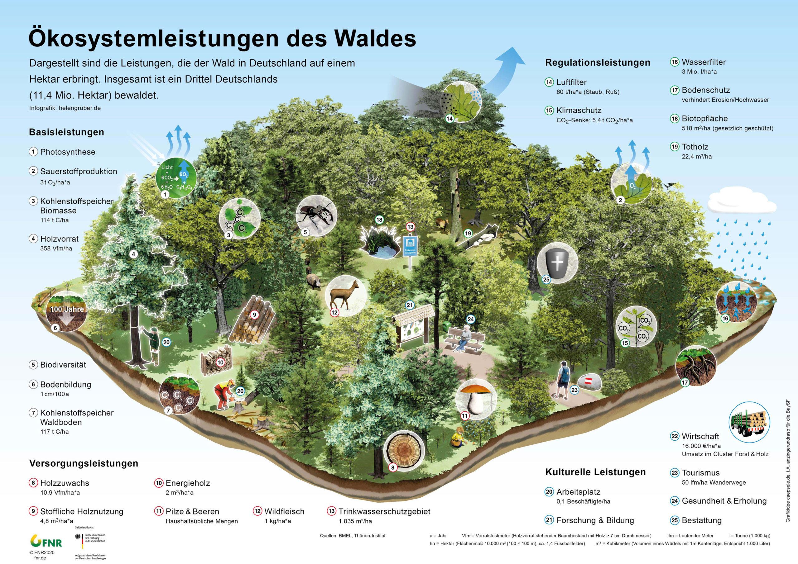 Funktionen des Waldes   Waldfunktionen   Ökosystemleistung Wald
