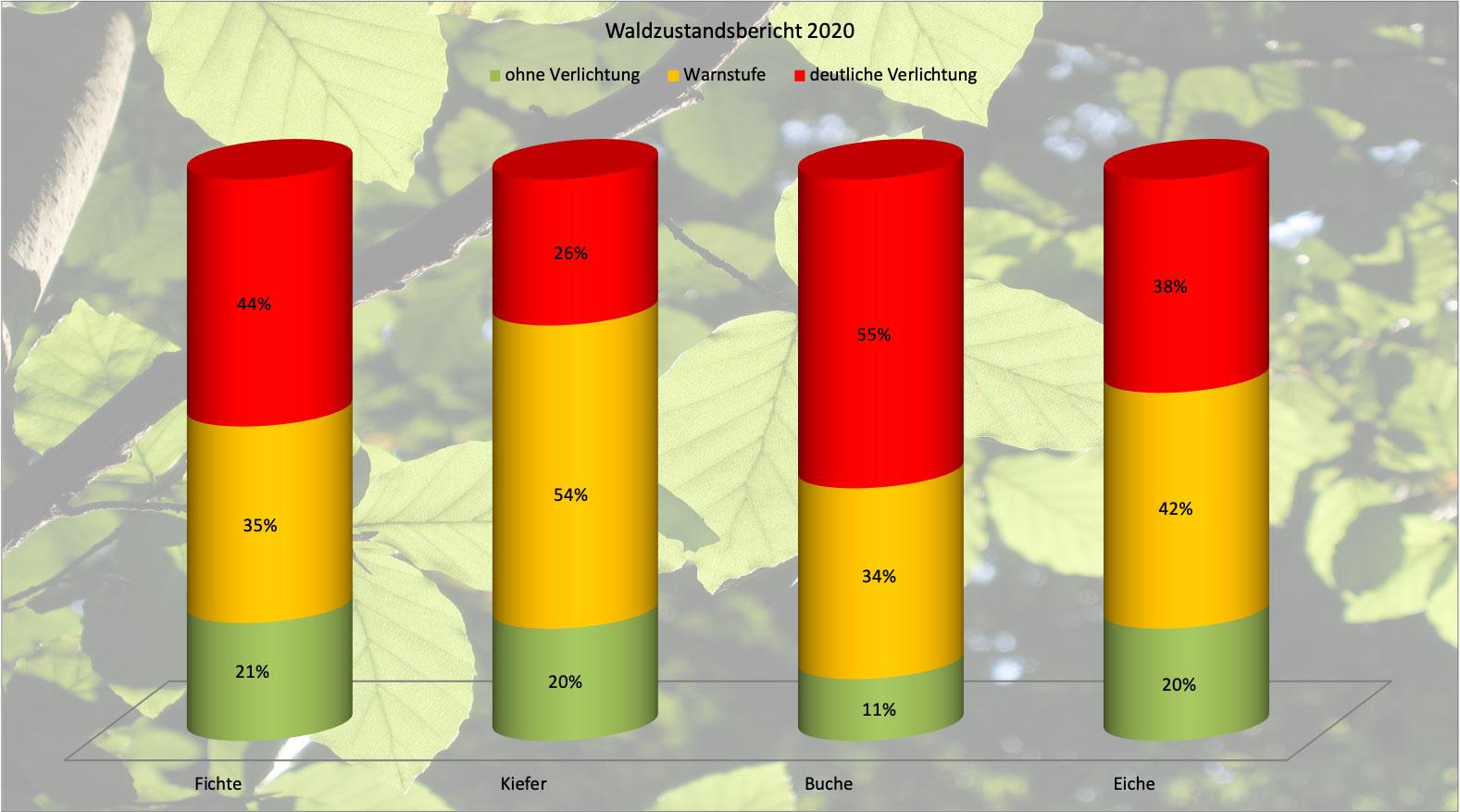 Waldzustandsbericht 2020 Deutschland