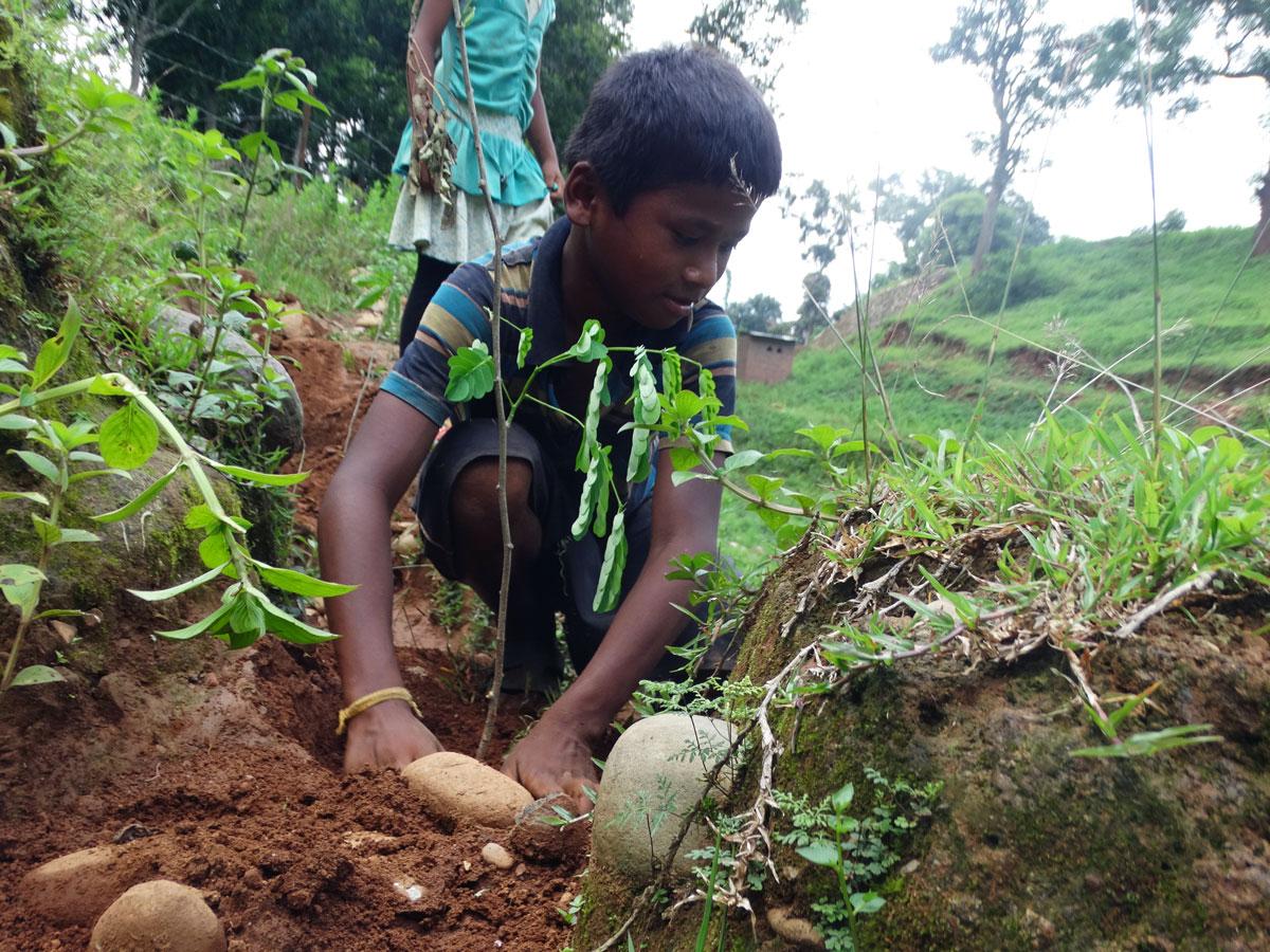 Baumpflanzung Nepal