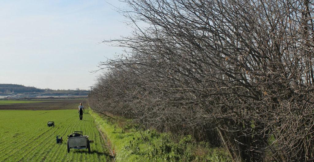 Hecken speichern Kohlendioxid und tragen zum Klimaschutz bei. Sie sind wichtige Strukturelemente in der Landschaft.